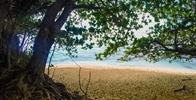 Pali Ke Kua Beach (Hideaways) - Shady trees.