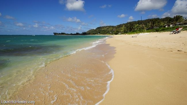 North Shore Oahu Dog Friendly Beaches