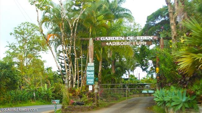 Maui Garden Of Eden - Botanical Gardens Arboretum - Activities On ...