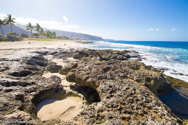 Dog Friendly Beaches Oahu