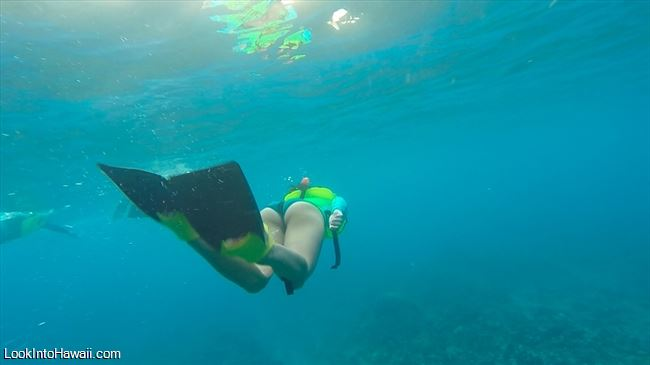 Best Snorkeling Beaches On The Big Island Information On